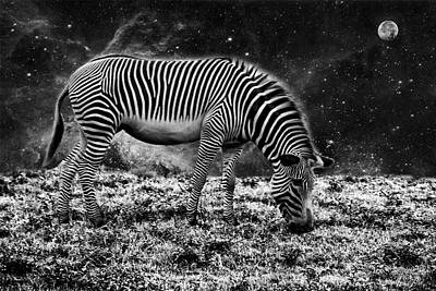 Photograph - Animal Night by Kevin Cable