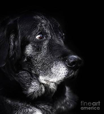Animal - Old Dog Art Print by Mythja  Photography