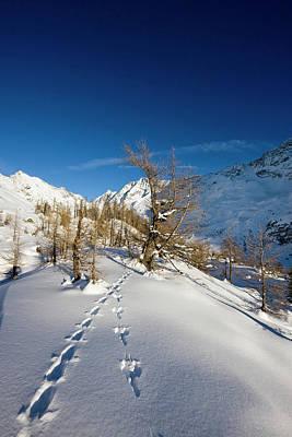 Animal Tracks In Deep Snow In Winter Art Print by Martin Zwick