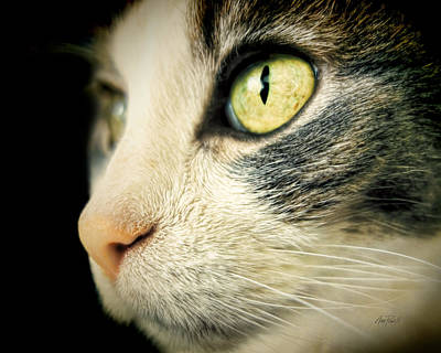 Photograph - animals - cats - Cat's Eye- photography by Ann Powell