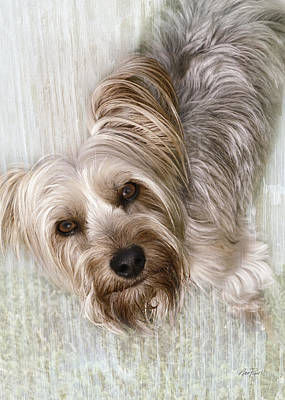 Digital Art - animals - dogs - Rascal by Ann Powell
