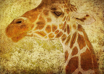 Photograph - animals - giraffe - Looking At You by Ann Powell