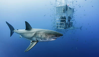 Reef Shark Photograph - Animals In Cage by Davide Lopresti