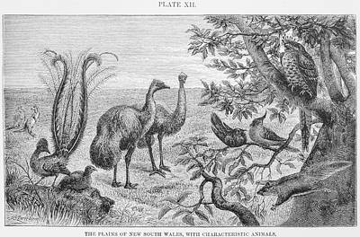 Animals Of The Plains Of New South Wales Art Print