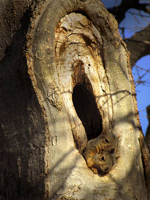 Photograph - animals squirrels The Hideout by Ann Powell