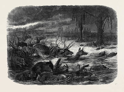 Animals Taking Refuge From A Prairie Fire Art Print by English School