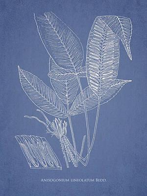 Anisogonium Lineolatum Art Print