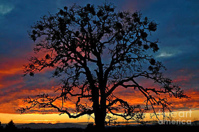 Art Print featuring the photograph Ankeny Hill Sunset by Nick  Boren