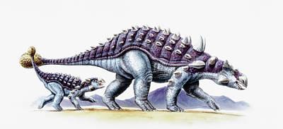 Paleozoology Photograph - Ankylosaurus And Young by Deagostini/uig