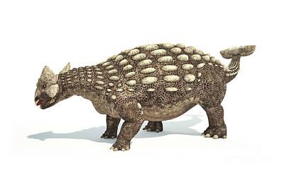 Ankylosaurus Dinosaur On White Print by Leonello Calvetti