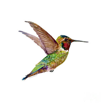 White Background Painting - Anna Hummingbird by Amy Kirkpatrick