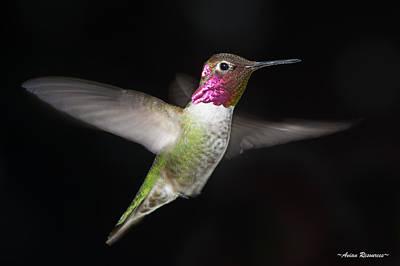 Photograph - Anna's Hummingbird 4 by Avian Resources
