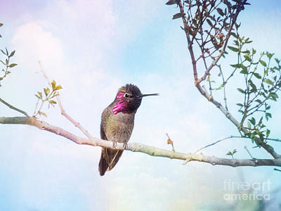 Photograph - Anna's Hummingbird Art by Marianne Jensen