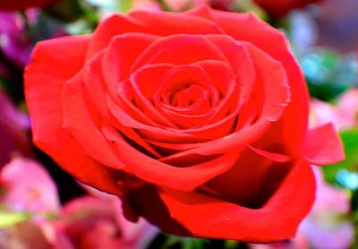 Photograph - Anniversary Rose by Jody Lane