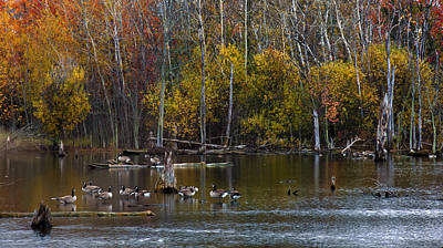 Photograph - Annual Meet And Greet At The Pond by Robin Webster