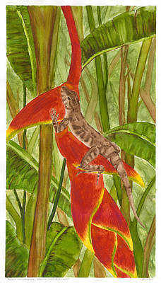 Painting - Anolis Humilis by Cindy Hitchcock