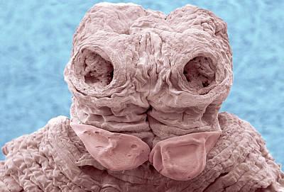 Anoplocephala Tapeworm Art Print