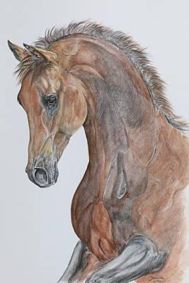 Another  Arabian Horse Art Print by Janina  Suuronen