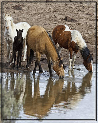 Forelock Photograph - Another At The Watering Hole by Wes and Dotty Weber