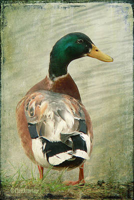 Print featuring the photograph Another Duck ... by Chris Armytage
