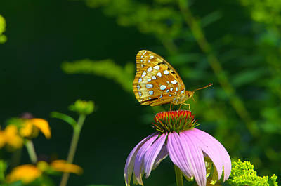 Sports Royalty-Free and Rights-Managed Images - Another Fritillary by David Tennis
