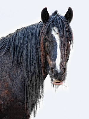 Long Mane Photograph - Another Horse With No Name by Joachim G Pinkawa