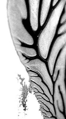 Digital Art - Another Perception by Christine Ricker Brandt