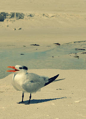 Photograph - Another Seagull At The Beach by Patricia Awapara