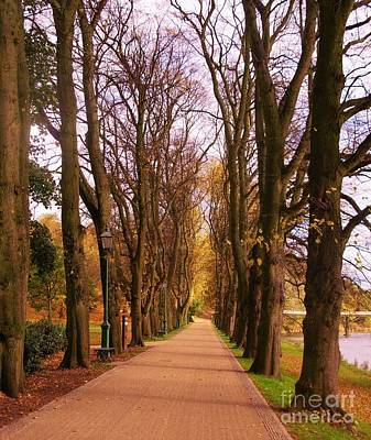Photograph - Another View Of The Avenue Of Limes by Joan-Violet Stretch