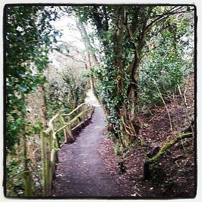 Pathway Photograph - Another World by Michael Henderson