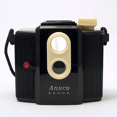 Ansco Photograph - Ansco Panda by Elena Bouvier