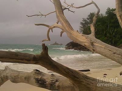 Photograph - Anse Soleil Beach by Ted Williams