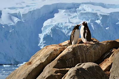 Photograph - Antarctic No. 3 by Joe Bonita