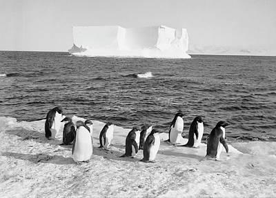 Antarctic Penguins And Iceberg Art Print by Scott Polar Research Institute