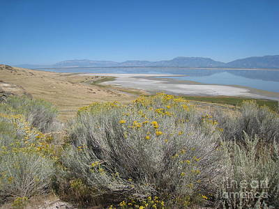 Working Cowboy Photograph - Antelope Island by Lisa Schafer