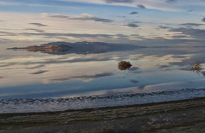 Art Print featuring the photograph Antelope Island - Lone Tumble Weed by Ely Arsha