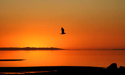Antelope Island Sunset - 1 Art Print by Ely Arsha