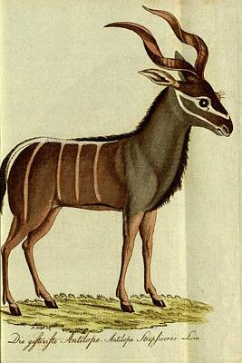 1757 Painting - Antelope by Celestial Images