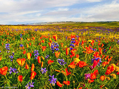 Photograph - Antelope Valley California Poppy Reserve by Bob and Nadine Johnston