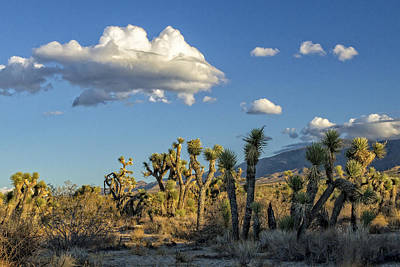 Photograph - Antelope Valley Joshua Trees 2 by Jim Moss