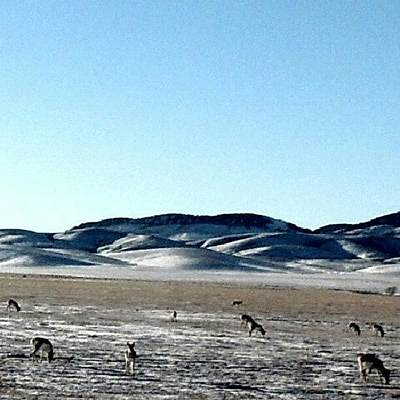 Truck Photograph - Antelope Winterscape by Kelli Stowe