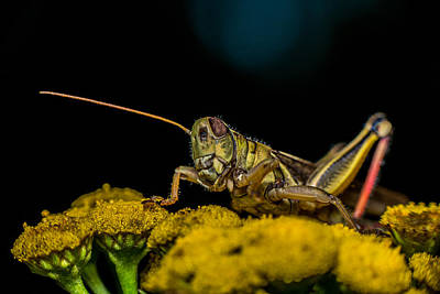 Cricket Photograph - Antenna Down by Paul Freidlund