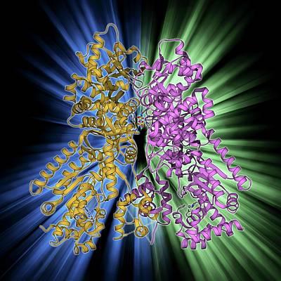 Anthrax Lethal Factor Molecule Art Print by Laguna Design
