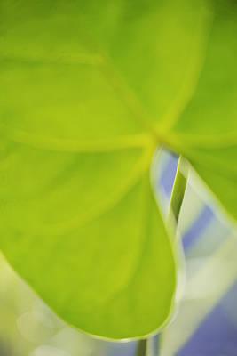 Decorativ Photograph - Anthurium by Silke Magino