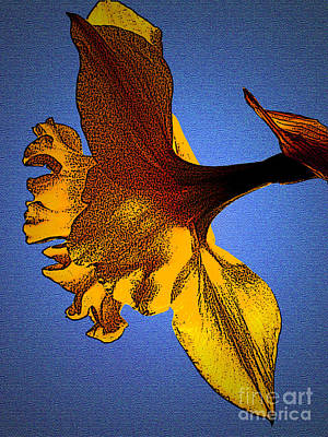 Photograph - Antiquated Daffodil by Amber Nissen