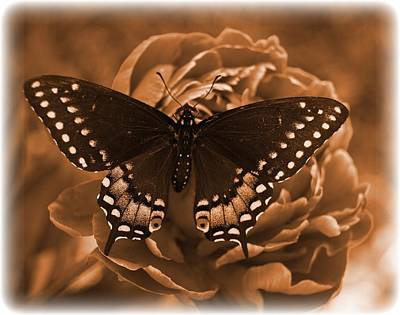 Antique Butterfly Art Print by Diane Reed