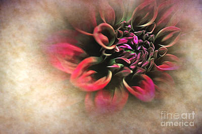 Photograph - Antique Dahlia by Kaye Menner