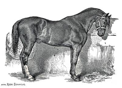 Horse Drawing - Antique Horse Drawing by Rose Santuci-Sofranko