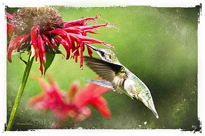 Antique Hummingbird Postcard No. 1124 Art Print