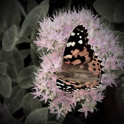 Art Print featuring the photograph Antique Monarch by Photographic Arts And Design Studio